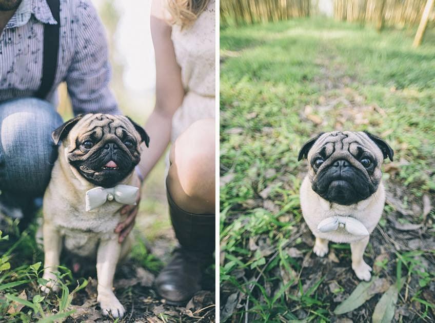 e-session - ensaio noivos - ensaio casal - ensaio ao ar livre - e-session ao ar livre - caozinho - cachorrinho - cachorro na e-session - cachorro no ensaio