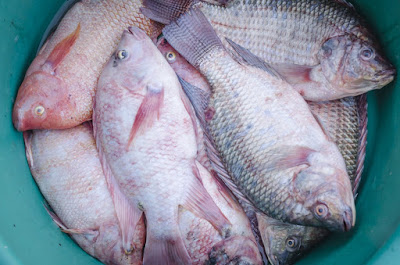 manfaat makan ikan untuk mencegah kanker
