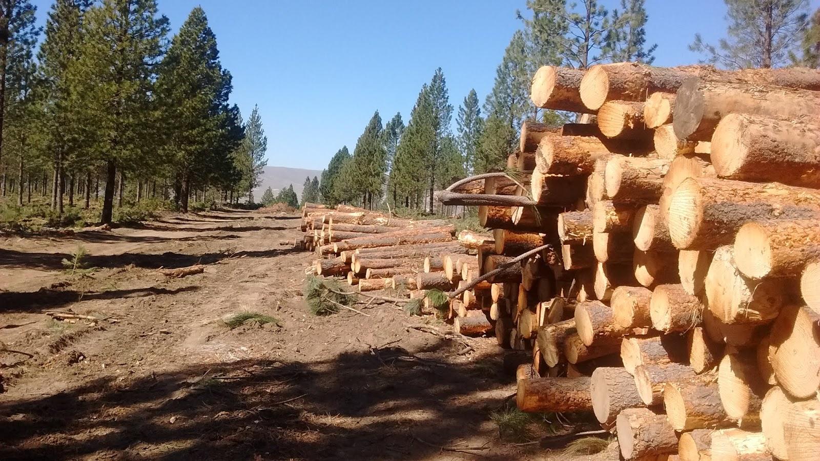 Pérdida forestal, mal de cada día