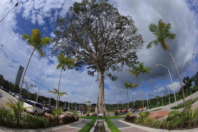Ideflor-Bio promove Semana da Festa Anual das Árvores