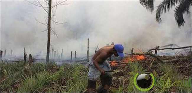 2 Petani Pembakar Lahan Ditangkap