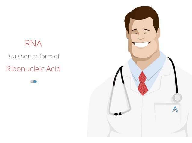 Know the Ten Essential Facts about Ribonucleic Acid (RNA)