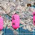 Kultura kawaii czyli różowy kicz podniesiony do rangi sztuki
