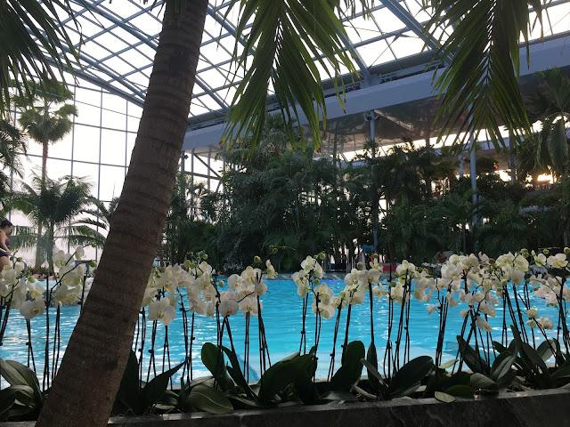 Florile puse strategic sa desparta piscina de zona de sezlonguri