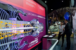 Tiranosaurio REX en MALOKA 2