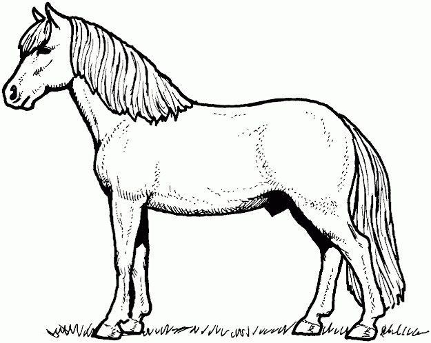 Cartoon Horse Coloring Page Cute Pages Wild Horses