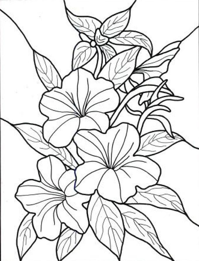 Contoh Gambar Bunga Melati Contoh Kono