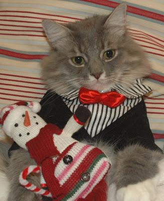 Imagen gatito vestido de gala - navidad