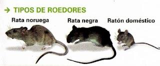 Control-ratas-ratones-en-su-hogar