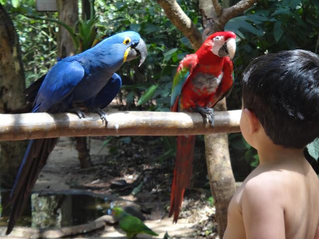 Parque das Aves, em Foz do Iguaçu - um baita passeio!