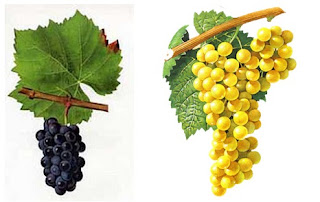 beaux-vin blog découvrir vin beaujolais