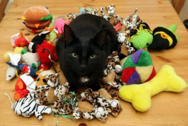 5 Reasons you should buy your cat a toy