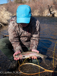 Rainbow Trout on DePuy Spring Creek
