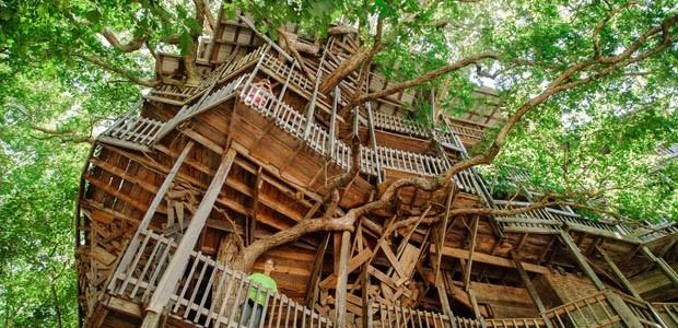 Rumah Pohon Terbesar Di Dunia 1