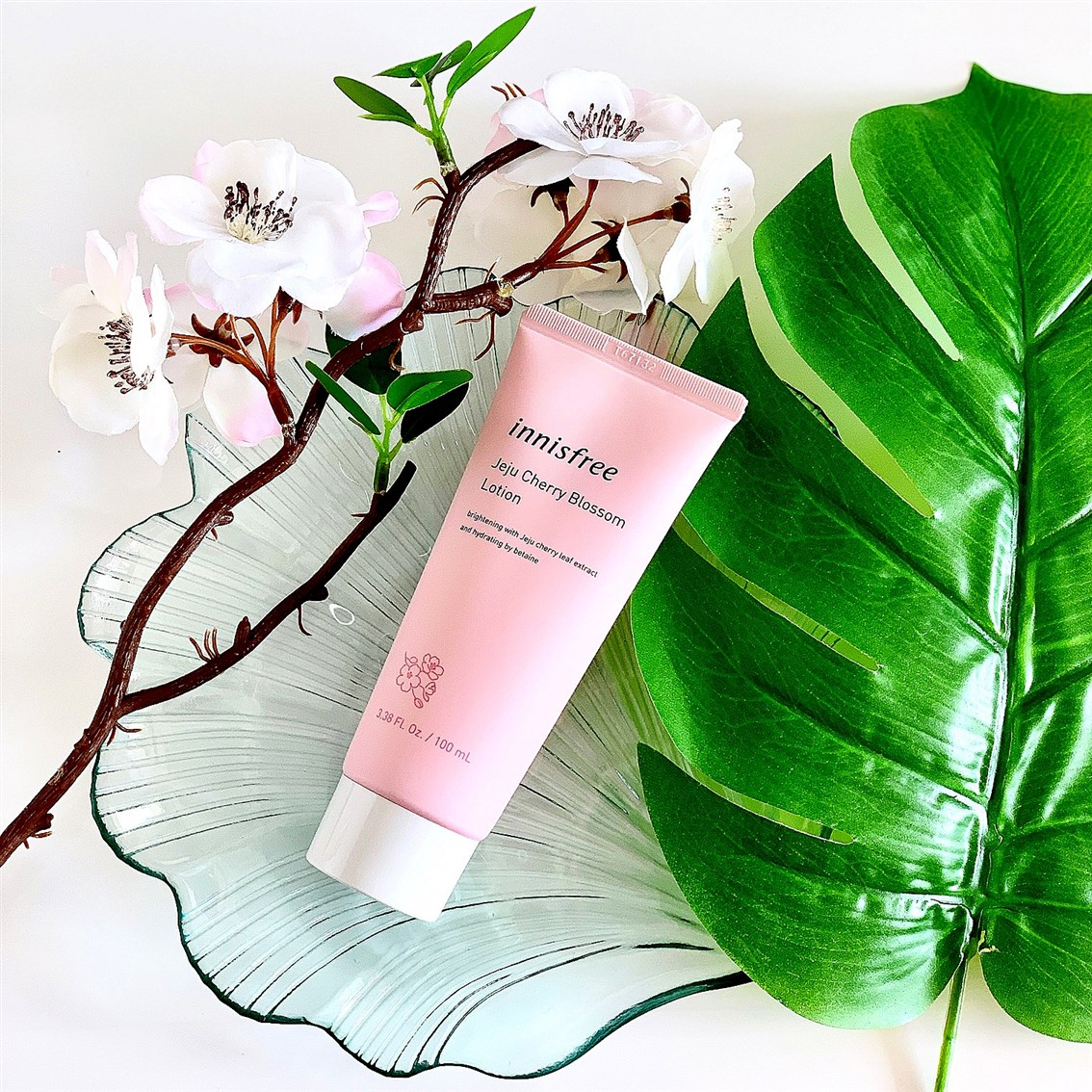 Innisfree Jeju Cherry Blossom Lotion opinie, blog