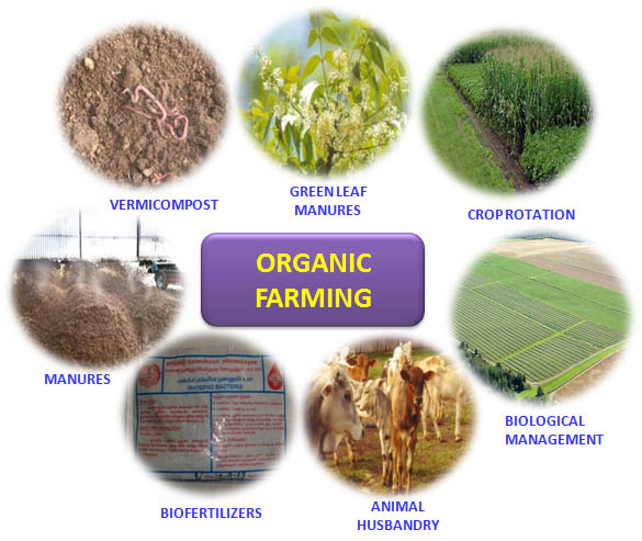 Organic Foods Good For The Environment
