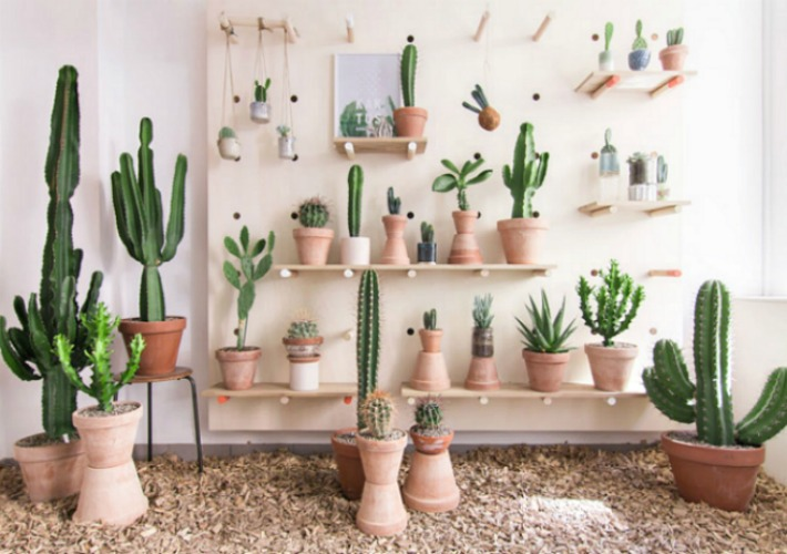 8 Diy e ideas para crear decoración Urban Jungle