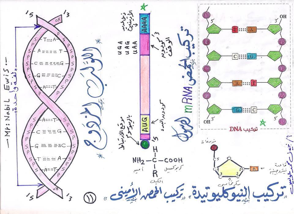 مراجعة رسومات الاحياء التى لن يخرج عنها امتحانات الثانوية العامة مستر نبيل عويس 11