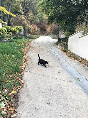 Чёрный кот