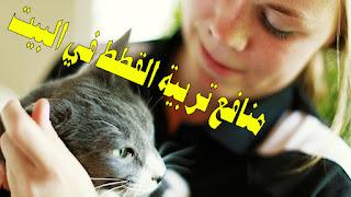 فوائد عديدة ستحصل عليها عندما تربي قطة في البيت
