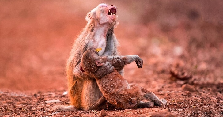 22 Photos That Utterly Capture Powerful Feelings - A monkey holds her kid that just fell from high up.