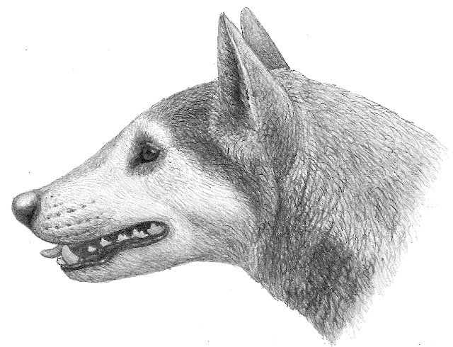 Fossil dog found to represent new species