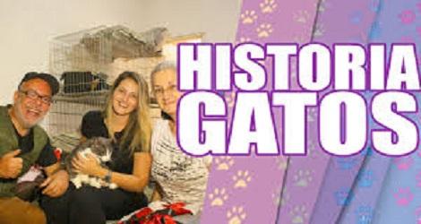 Uma Linda História de Gatos