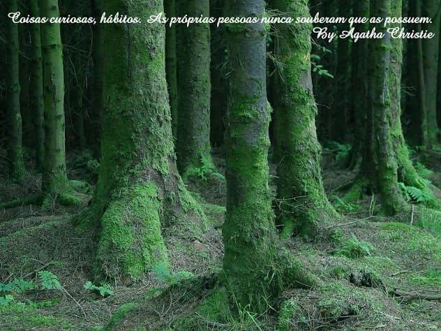 Foto de Floresta com tronco das árvores verdes