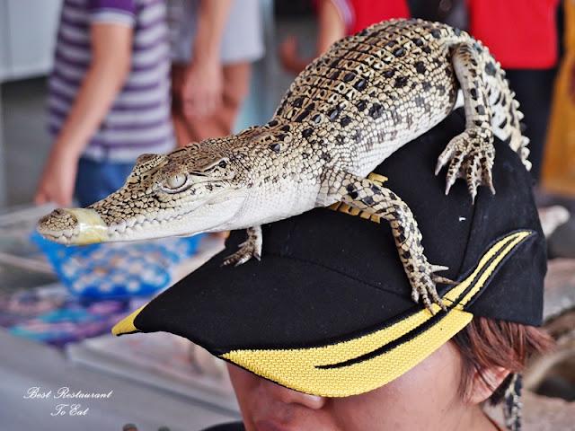 Upclose With Crocodile