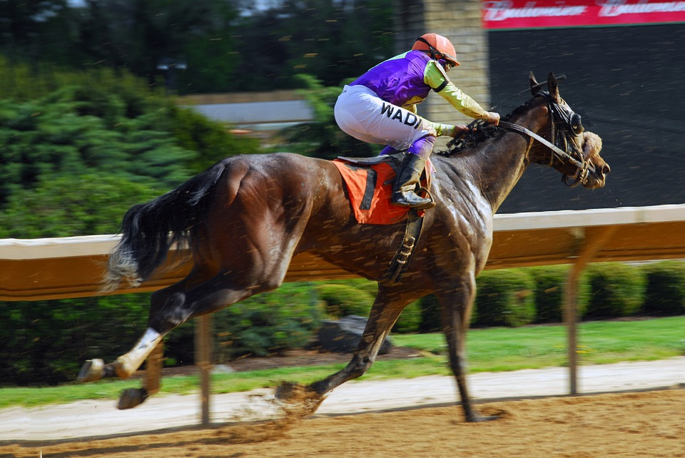 Joe Dorish Sports: Trainers Who Won the Preakness Stakes ...