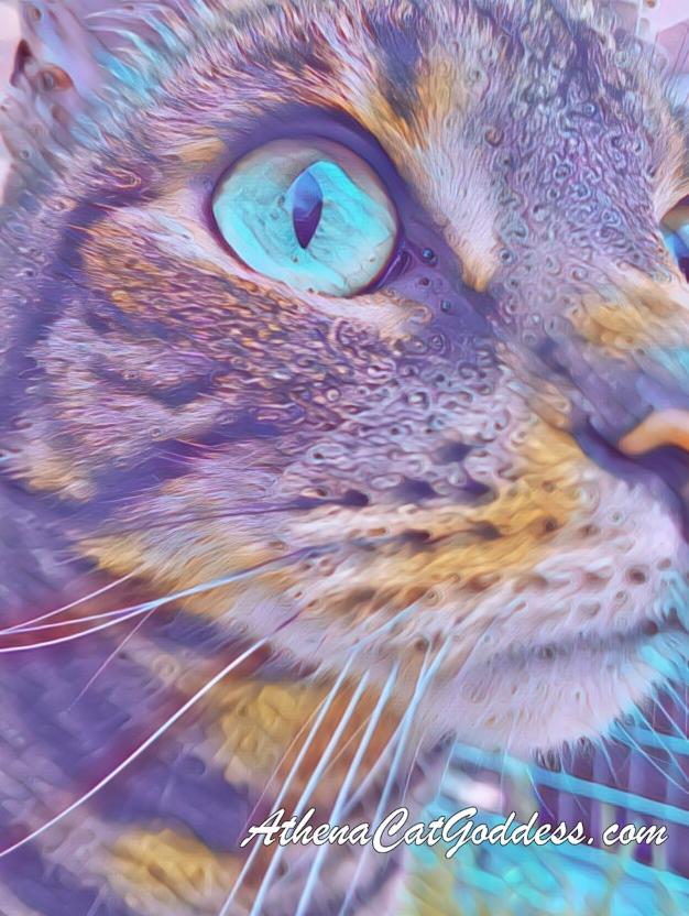 cat art created using PicsArt app
