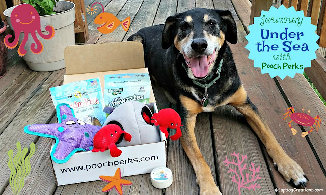 senior rescue mixed breed dog pooch perks box