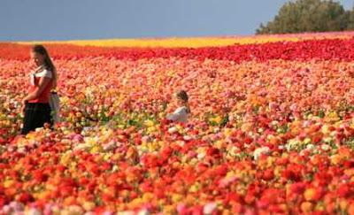 Inilah Taman Bunga Terindah yang Menakjubkan