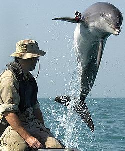 Delfines para la guerra