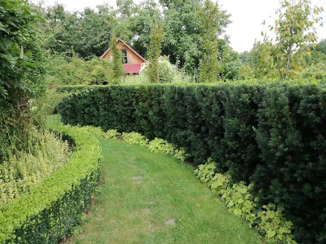 żywopłot z bukszpana, ścieżka ogrodowa