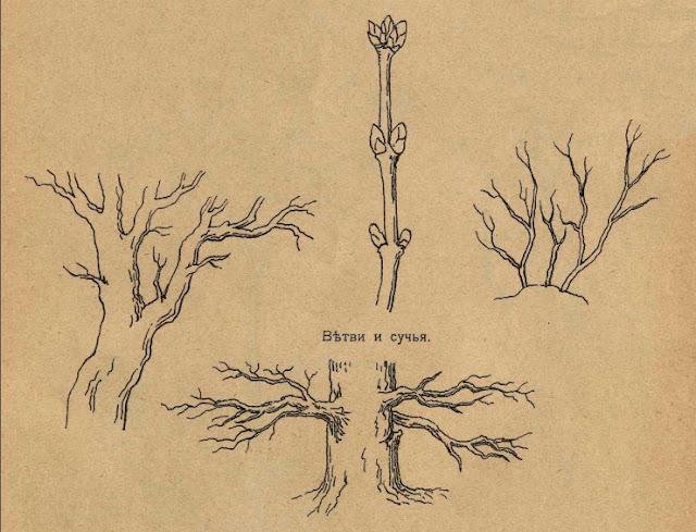 учимся рисовать деревья и ветки
