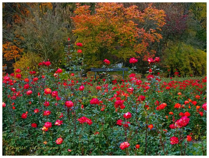 różanka Ogród botaniczny Poznań