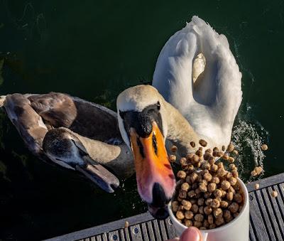 Photo of feeding time