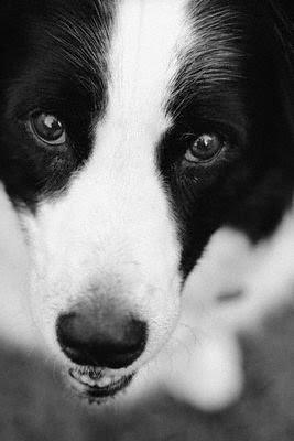köpek-hayvan-sevgisi