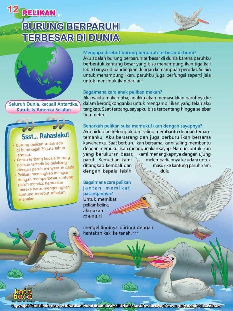Burung Pelikan - Burung Berparuh Terbesar di Dunia