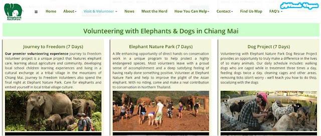 Programa de voluntariado no Elephant Nature Park