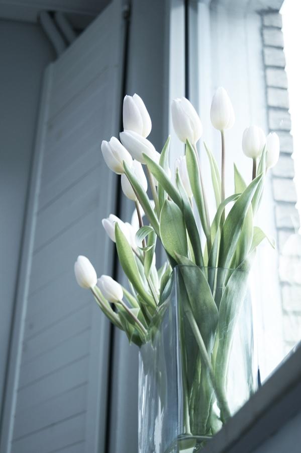 Blog + Fotografie by it's me fim.works - weiß eTulpen mit lilafarbenen Spitzen, Fenster, Fensterladen