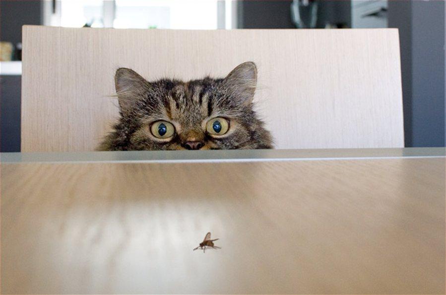 funny-cat-hunting-eyes.jpg