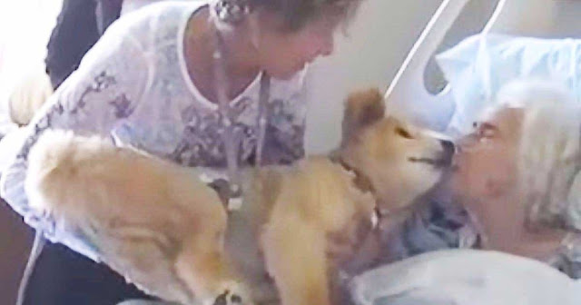 Dying woman holds 19-year-old service dog close. Dog's next move has everyone in tears
