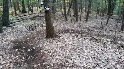 singletrack trail at Catamount State Forest