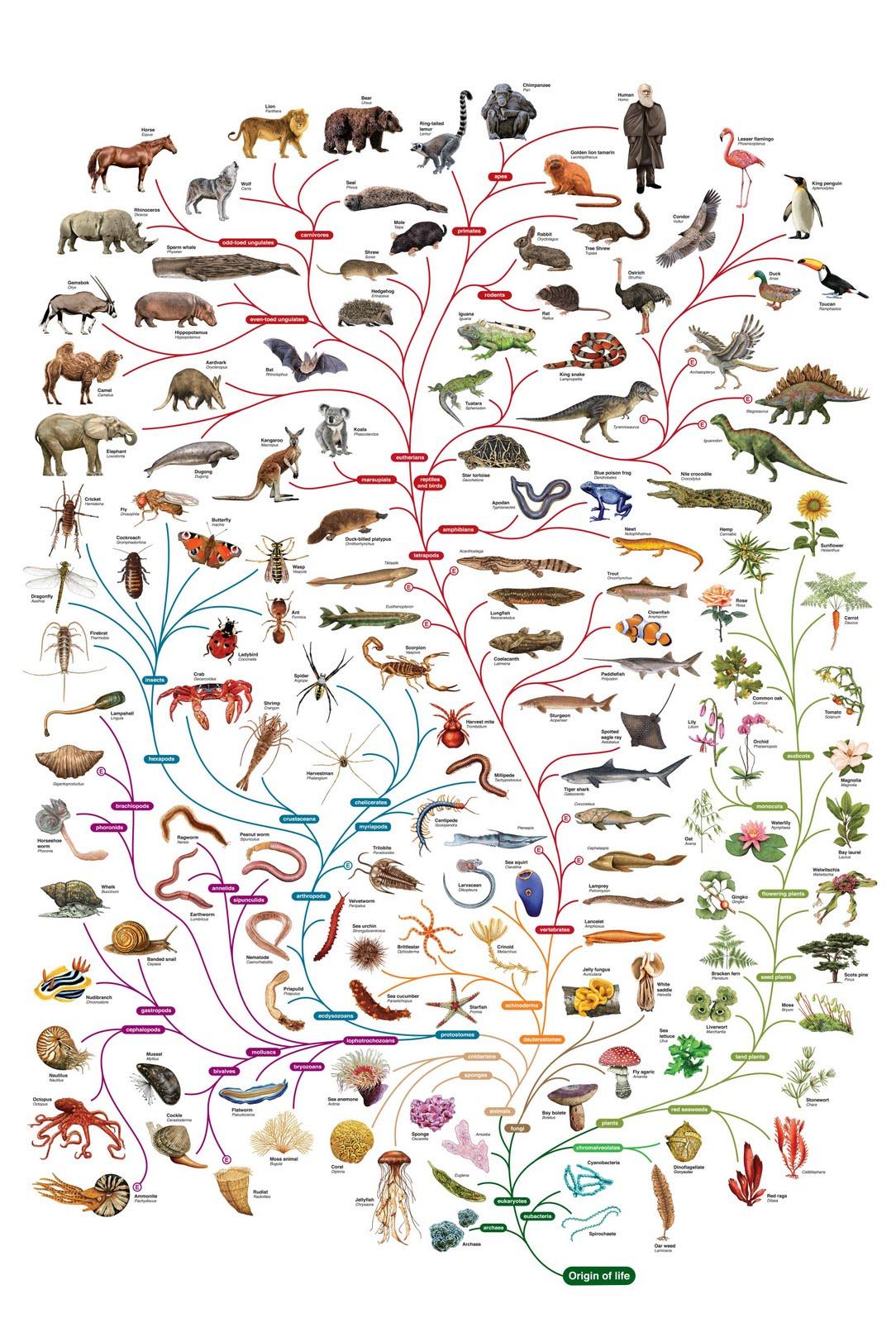 Tree Enlightenment: Darwin for you (Y7)