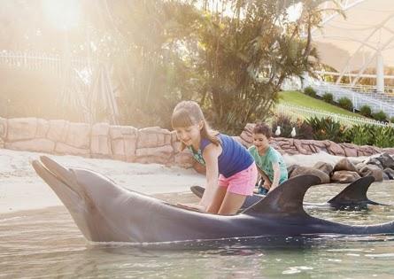家族に人気ゴールドコーストのファミリーリゾート『シーワールドリゾート』で子供がイルカに触っている写真