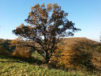 Der Schafbuckel - eine Wiesen und Wacholderlandschaft östlich des Randecker Maars