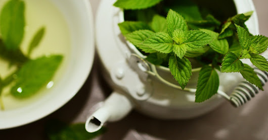 Everything on green tea and weight loss