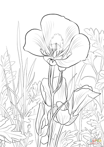 Click The Sego Lily Coloring Pages To View Printable Version Or Color It  Online Patible With Ipad And Android Tablets